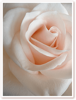 Присутствие Безусловной Любви